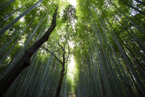 bamboo hairfluence